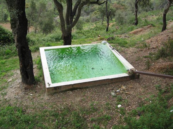 El artista Jesús Palomino (Sevilla, 1969) inaugura las actividades del Centro SIERRA, el 2 de julio, con una intervención en el entorno natural de la Finca Los Veneros.